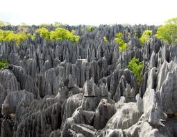 Rock Forest, Madagascar