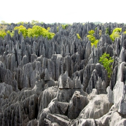 Rock Forest, Madagascar